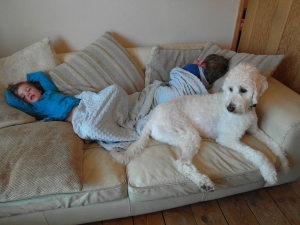 Poorly boys and a protective dog